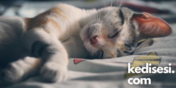Kedilerin Mutlu Olduğunu Nasıl Anlarız?