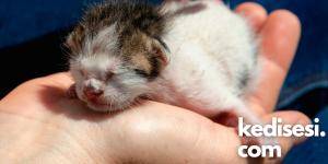 Kedilerde Görülen Beyin Hastalıkları Ölümcül müdür?