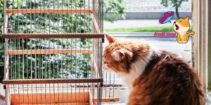 Kediler ve Kuşlar Aynı Evde Yaşayabilir Mi?