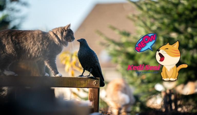Kediler Kuş Yer Mi? Aynı Evde Yaşayabilir Mi?
