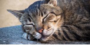 Kediden Salya Akmasının Nedenleri