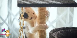 Kedileri Tırmalama Tahtasına Alıştırma Yöntemleri