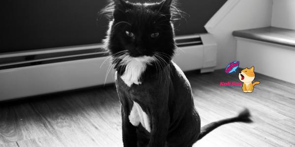 Kedileri Sıcaktan Koruma Yöntemleri