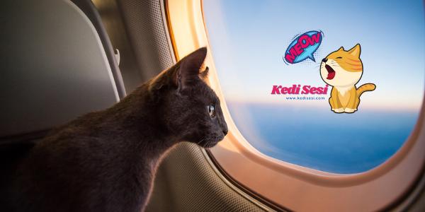 Kedimle Uçağa Binebilir Miyim?