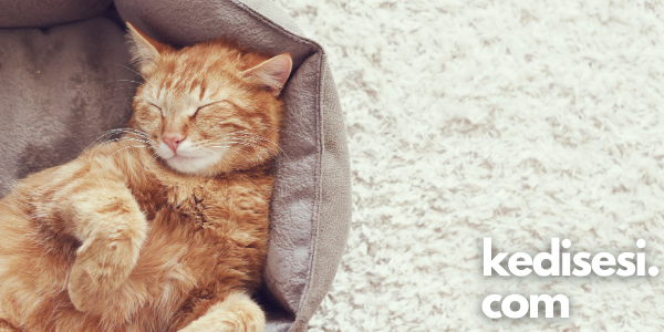 Kediler Neden Sırt Üstü Uyur?