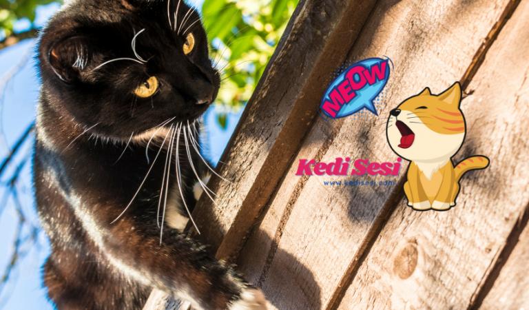 Kediler Neden Yüksek Yerleri Sever?