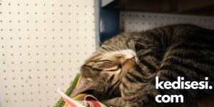Kedilerin Horlaması Bir Hastalık Belirtisi mi?