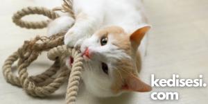Kediler Oynadıkları İpleri Yutar mı?