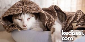 Kedilerimize Kıyafet Giydirmek Doğru mudur?