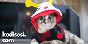 Kedilerimize Kıyafet Giydirmenin Zararları