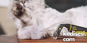 Kedilere Karşı Alerjim Olup Olmadığını Nasıl Anlarım?
