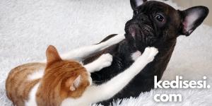 Kediler ve Köpekler Aynı Evde Yaşarsa!