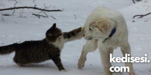 Kedilerin Köpeklere Saldırmasının Nedenleri