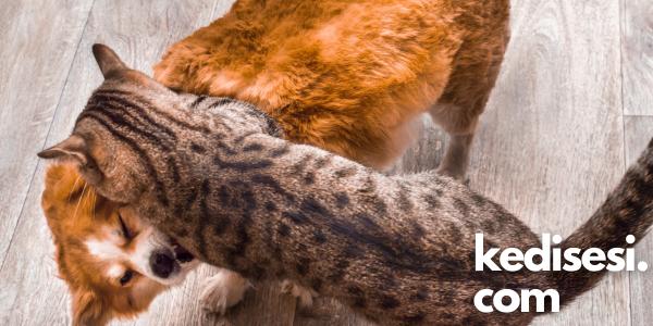 Kediler ve Köpekler Aynı Evde Yaşayabilir mi?