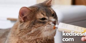 Kedi Maltını Ne Sıklıkla Kullanmalıyız?