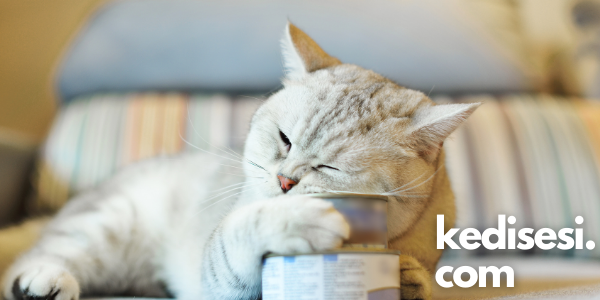 Kedilerde Gıda Alerjisi Sebepleri