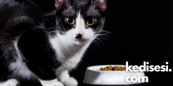 Kedilerin İştahı Neden Kesilir?
