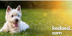 Her Köpekle Dostluk İlişkisi Kurulur mu?