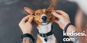 Köpeklerle İnsanlar Arasındaki Dostluk