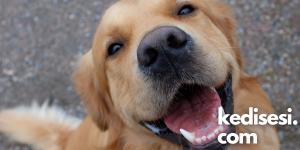 Köpekler Neden İnsanların En İyi Dostudur?