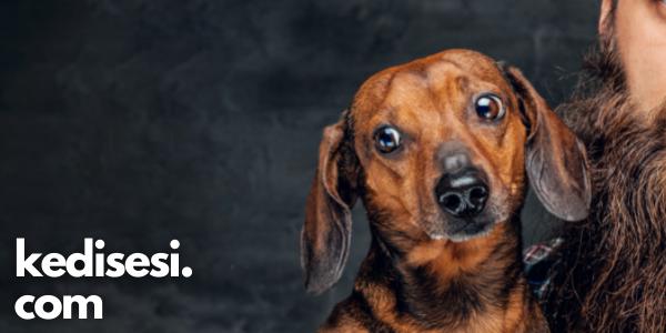 Köpeklerin Bıyıkları Ne İşe Yarar?