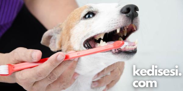 Köpeklerin Dişleri Fırçalanır mı?
