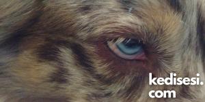 Mavi Göz Hastalığı Nasıl Bulaşır?
