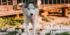 Köpek Kistinden Köpeğimi Nasıl Koruyabilirim?