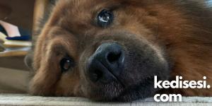 Köpeklerin İç Çekme Sebepleri Nelerdir?