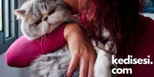 Kedileri Öpmenin Bir Zararı Var mı?
