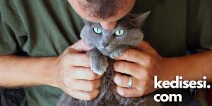 Kediler Öpüldükleri Zaman Ne Hisseder?