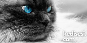Kedilerin Gözleri Neden Geceleri Parlar?