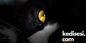 Kedilerin Gözleri Karanlıkta Hangi Renk Parlar?