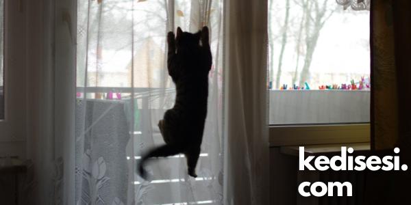 Kedilerin Perdelere Tırmanmasını Nasıl Önleriz?
