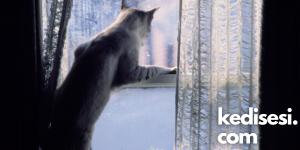Kedilerin Perdelere Tırmanmasını Önleyecek Yöntemler
