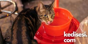 Sokak Kedileri için Neler Yapabiliriz?