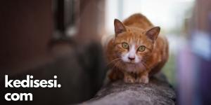 Sokak Kedileri Ortalama Ne Kadar Yaşar?