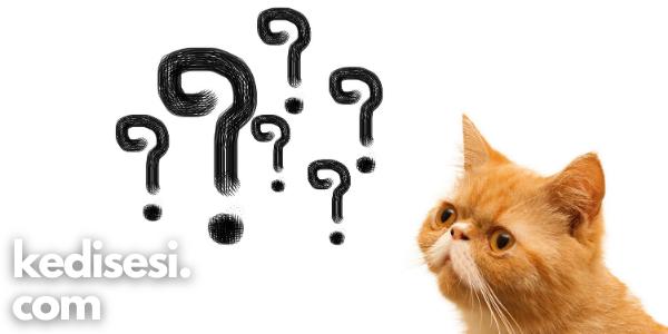 Kediler Sahibini Tanır Mı?
