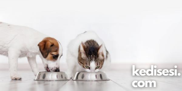 Ucuz Kedi ve Köpek Mamaları Zararlı mıdır?