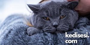 Kedileri Soğuktan Korumak İçin Ne Yapabiliriz?