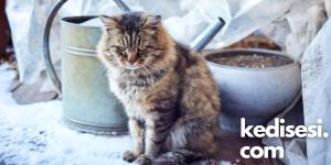 Kedilerin Üşüdüklerini Nasıl Anlarız?