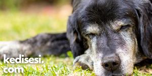 Yaşlı Bir Köpekle Yaşamanın Olumlu Yanları