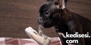 Köpekler Ayakkabılar İle Neden Oynar?