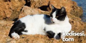 Kedilere D Vitamini Nasıl Verilir?