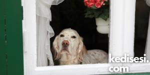 Köpekler Kaç Saat Yalnız Kalabilir?