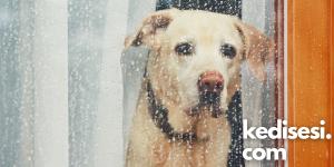 Köpeklerin Dışkısını Yemelerini Önlemek için Neler Yapılabilir?