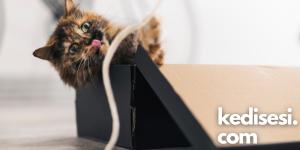 Kedilerin Elektrik Kablolarını Kemirmelerinin Sebepleri