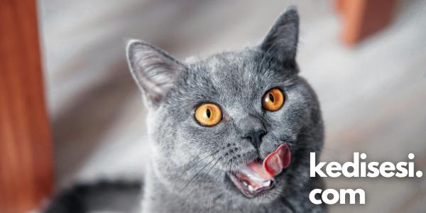 Kedi Dili Hakkında Bilinmeyenler