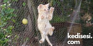 Kedi Filesi Yaptırmanın Faydaları Nelerdir?