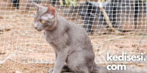 Kedi Filesi Nedir? Ne İşe Yarar?